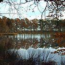 Reflections in Fall by ienemien
