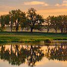 Colorado Trees & Lake at Sunrise by John  De Bord Photography