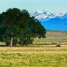 Summer Morning On The Colorado Plains by John  De Bord Photography
