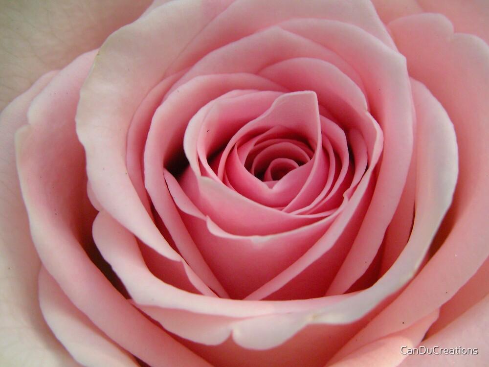 Pink Swirls by CanDuCreations