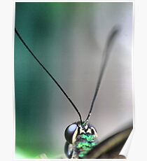 Butterfly at Santosa  (1)..macro. Poster