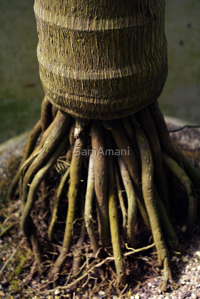 roots by SaniAmani