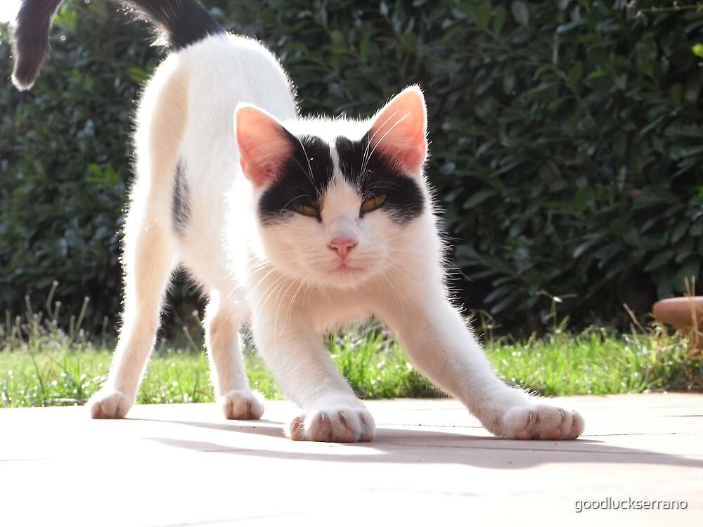 cat heaven by goodluckserrano