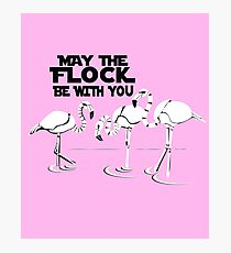 MAY THE FLOCK BE WITH YOU flamingos Photographic Print