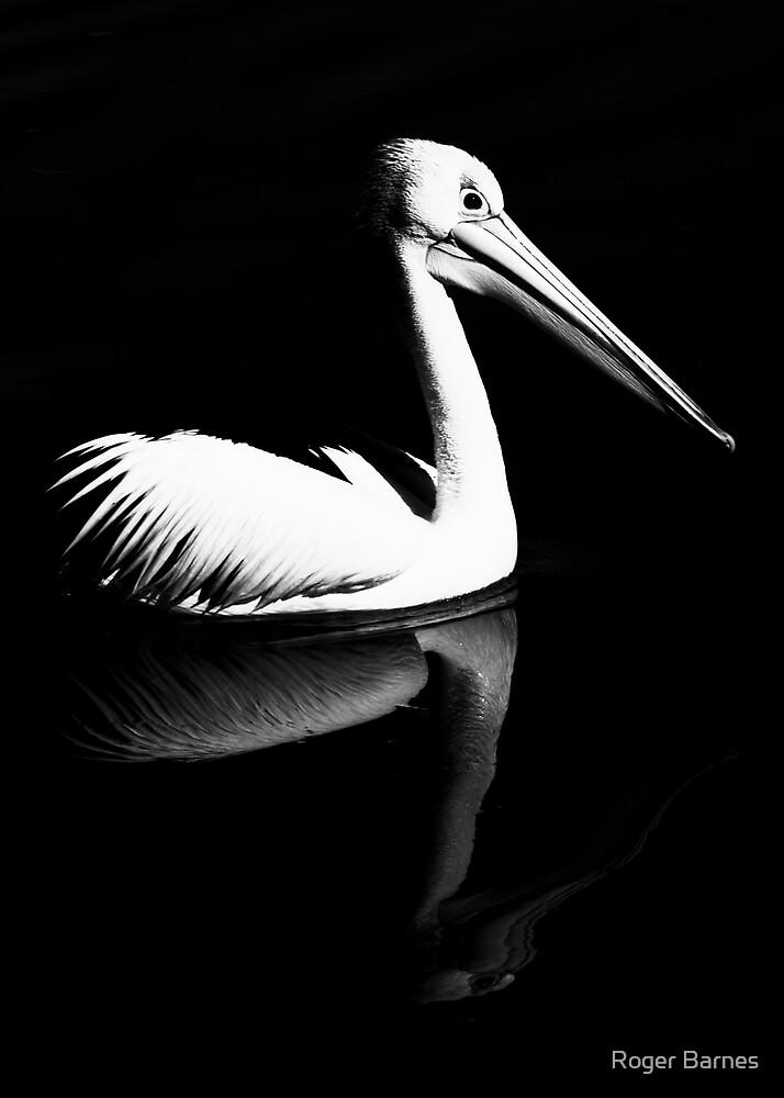 Pelican Reflection II by Roger Barnes