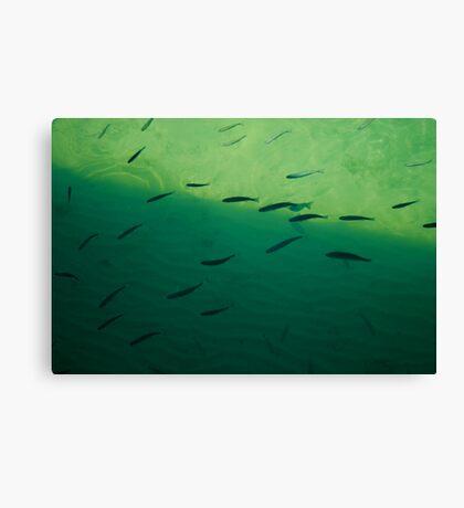Seascape. Canvas Print