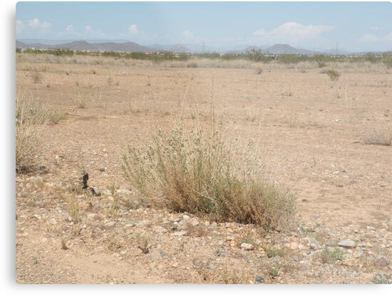 Desert Panorama by Bonnie Pelton