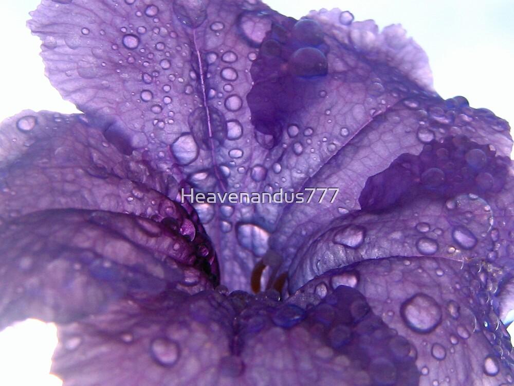 Purple Flower with Dew Drops by Heavenandus777