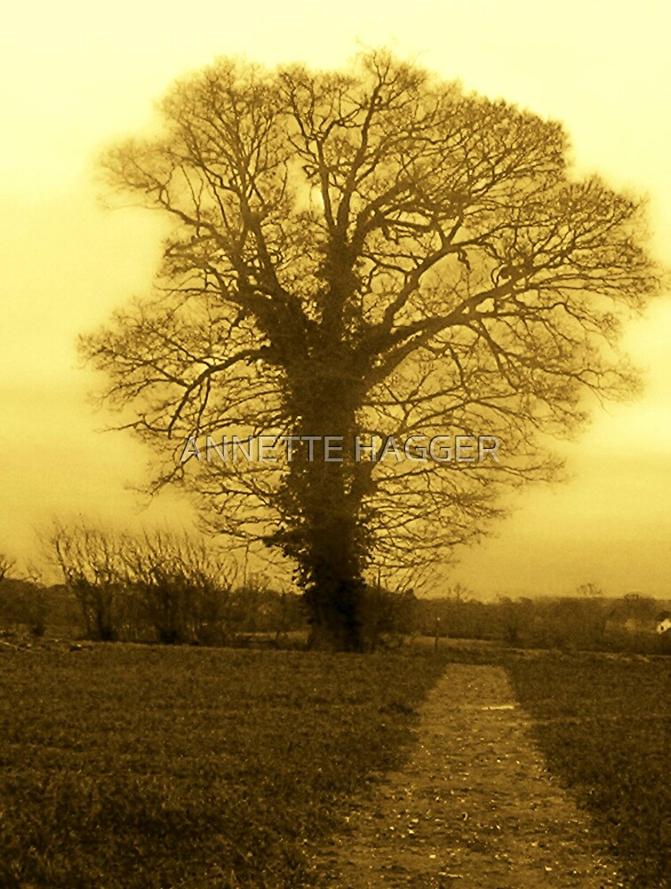 sepia tree by ANNETTE HAGGER