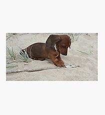 puppy play Photographic Print