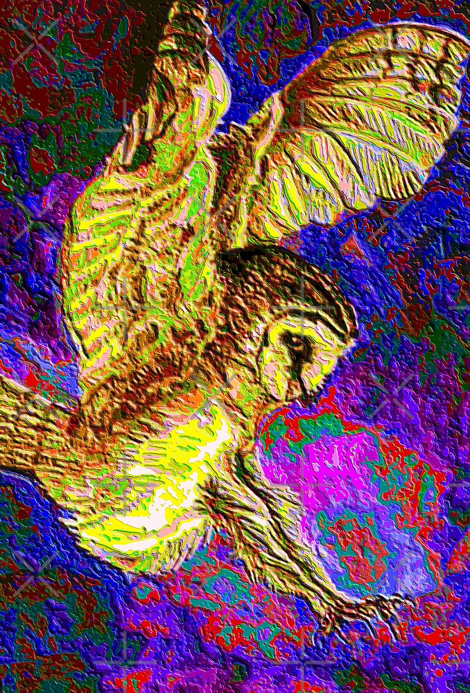 phsyco owl by dnlddean