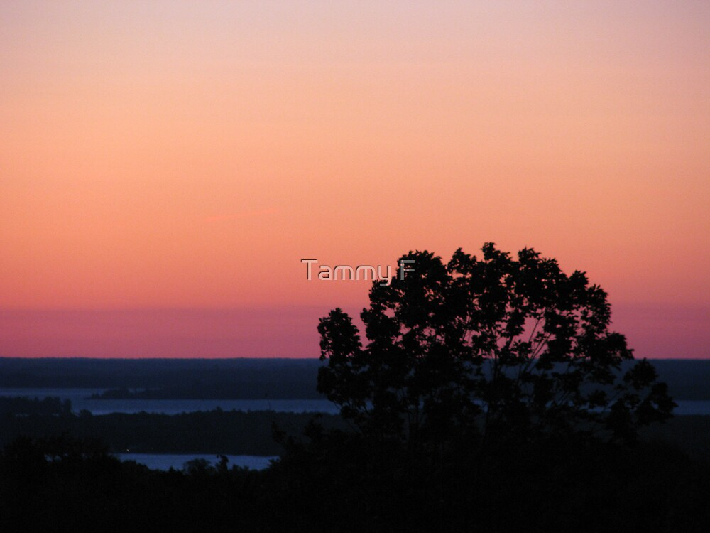 Pink Hues by Tammy F
