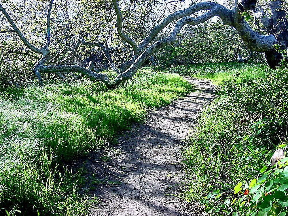 Nature Trail by Liz Wear