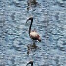 Flamingo Fledgling Watercolor  by taiche
