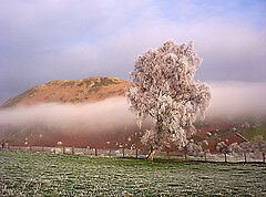 Hoar Frost Mid Wales by goldenginger