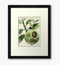 Brown Scale Framed Print