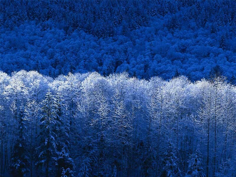 Winter by rolltide10