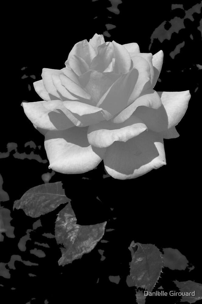 White Beauty by Danielle Girouard