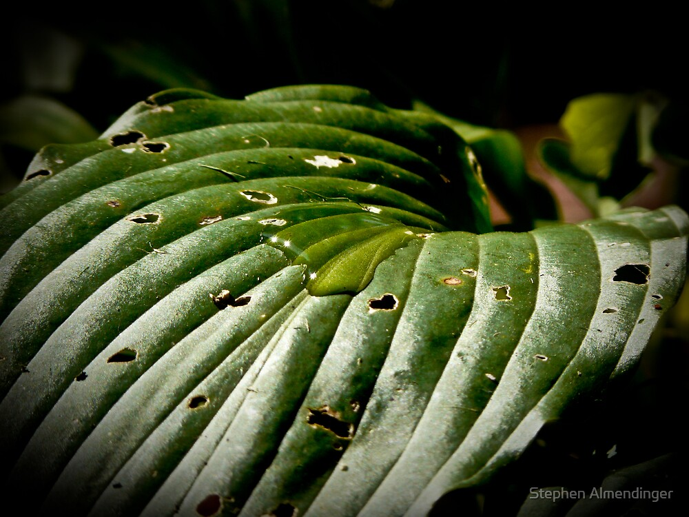 water droplet by Stephen Almendinger
