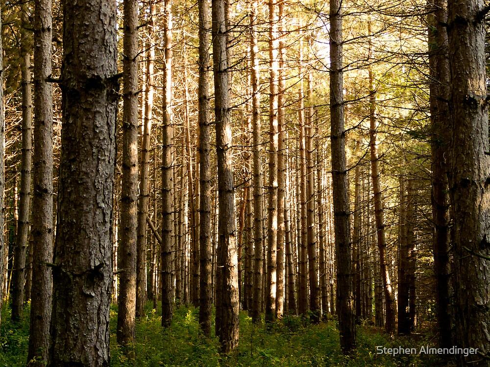 Trees at dusk by Stephen Almendinger