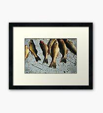 Walleye Framed Print