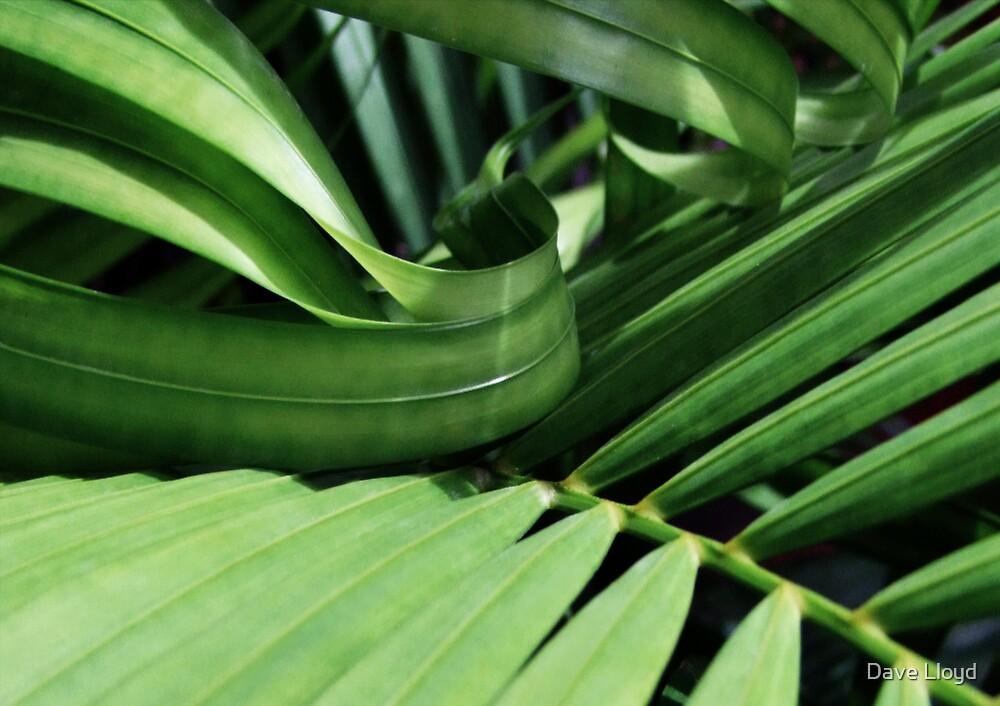 Green Swirl by Dave Lloyd
