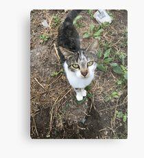 Kitty Cat Metal Print