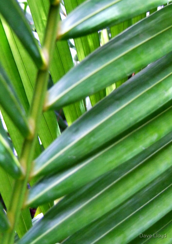 Fronds by Dave Lloyd