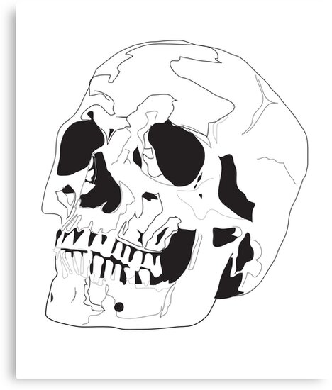 Skull by Lizzy M