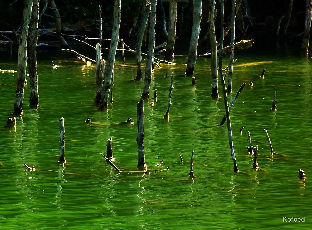 Dead Wood by Kofoed
