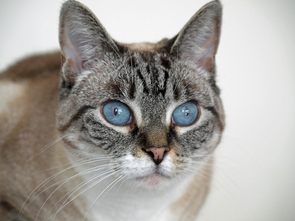 Beautiful Blue Eyes by Kimberly  Dugan