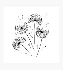Floral pattern of dandelions Photographic Print