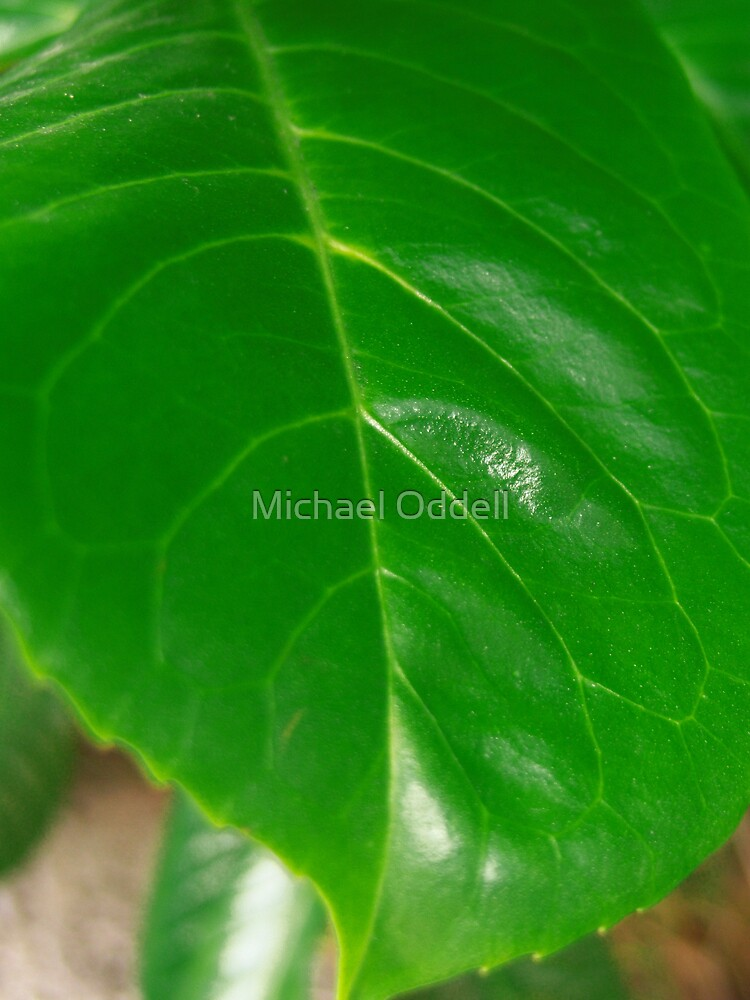 Just a leaf by Michael Oddell