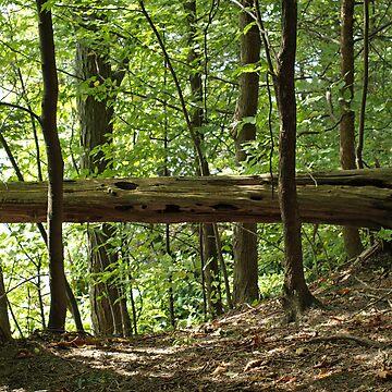 Fallen Tree by kdugan01