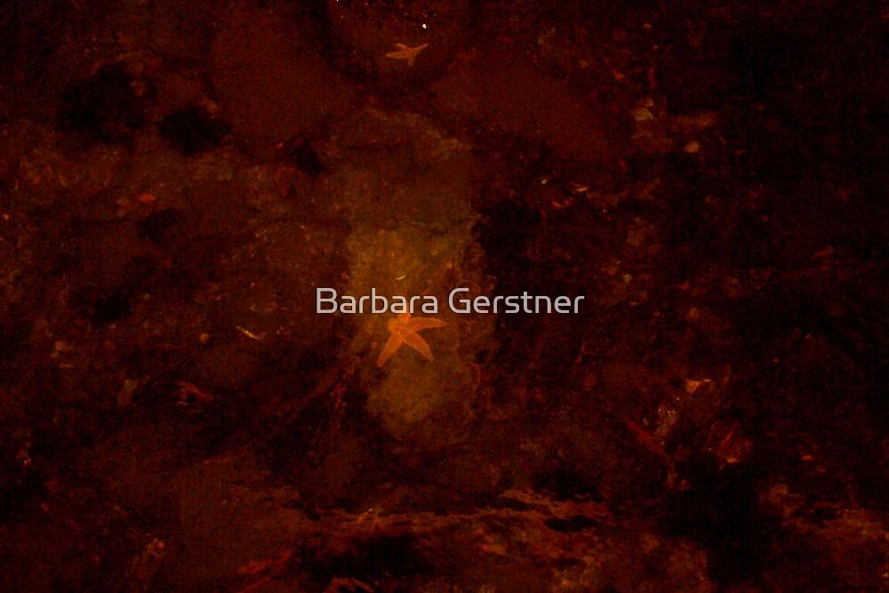 Starfish by Barbara Gerstner