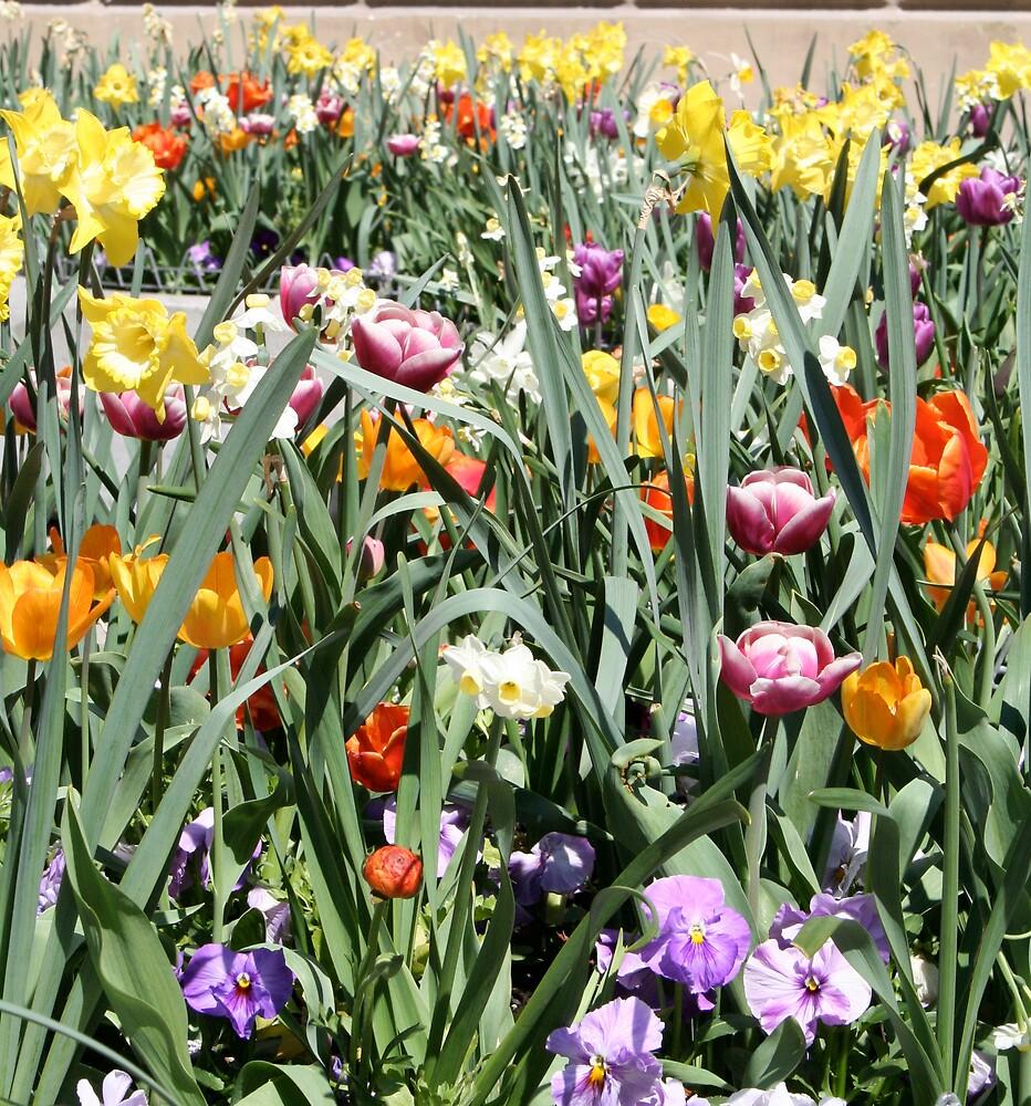 Tulips in München by VickiM