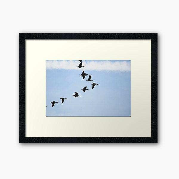 Brent Geese  Framed Art Print
