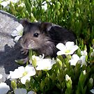 My Pet Hamster by Peter L