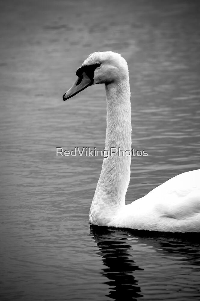 Swan at the lake by RedVikingPhotos