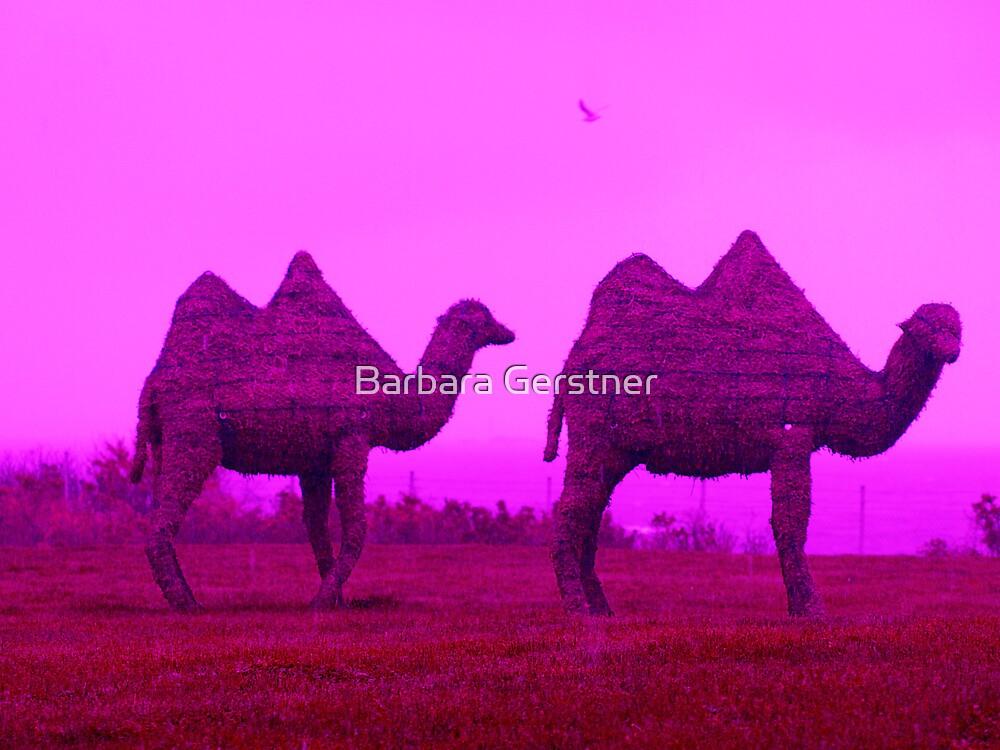 Newport Camels by Barbara Gerstner