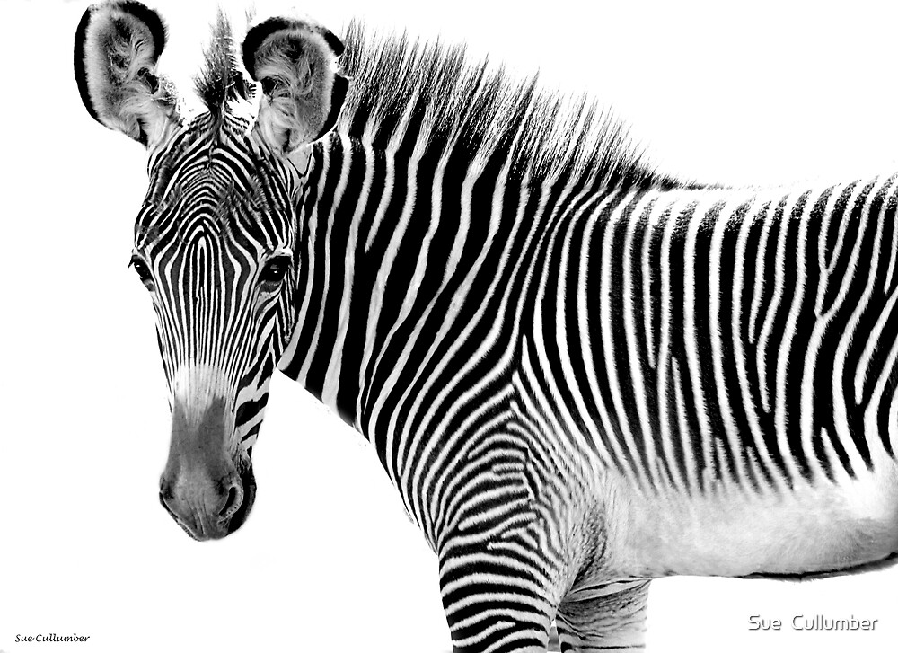 All Stripes by Sue  Cullumber