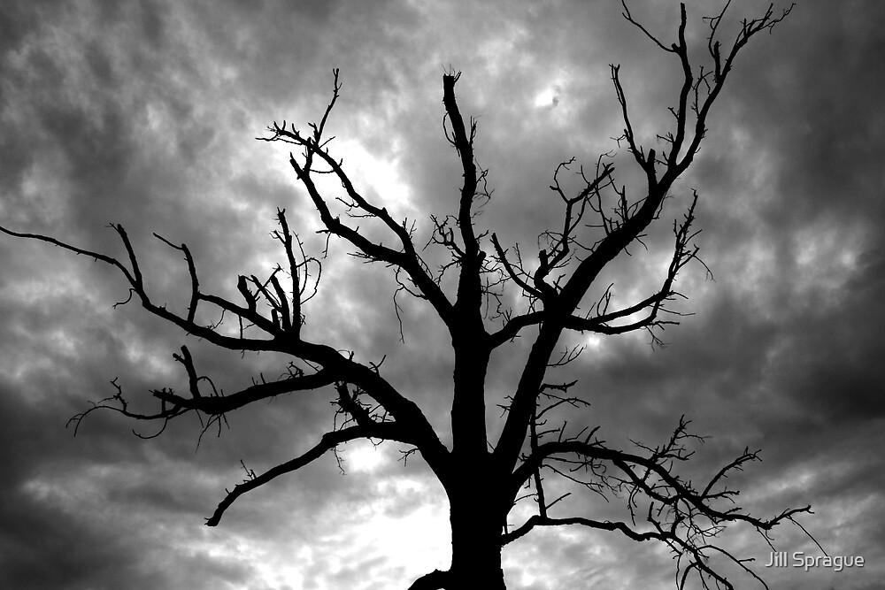 Spook by Jill Sprague