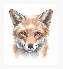 Sly clever fox watercolour Photographic Print