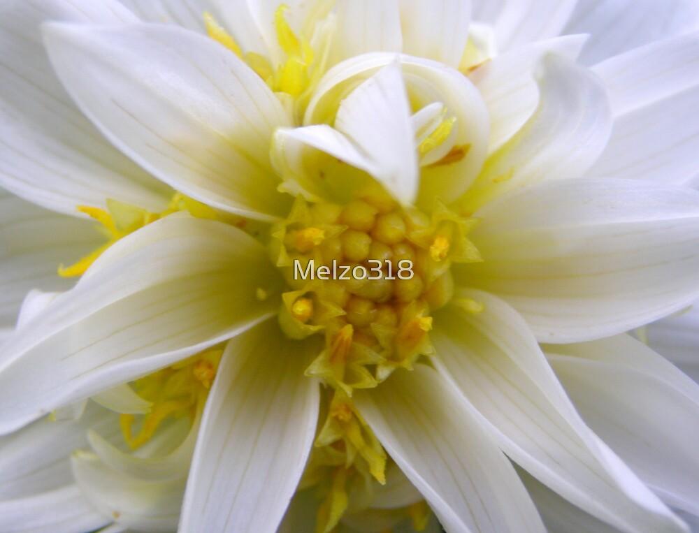 White Dahlia by Melzo318