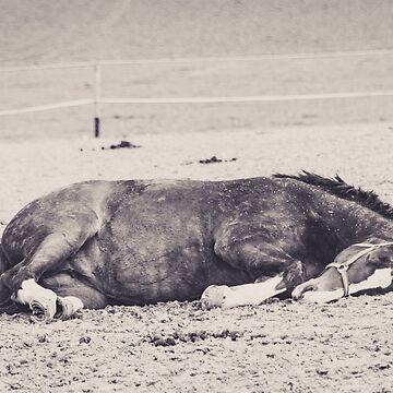 Schlafendes Pferde auf der Weide by pASob-dESIGN
