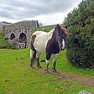 Dartmoor Pony by trish725