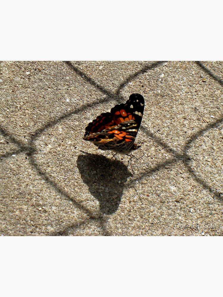 American Beauty Butterfly by alwaysdrc