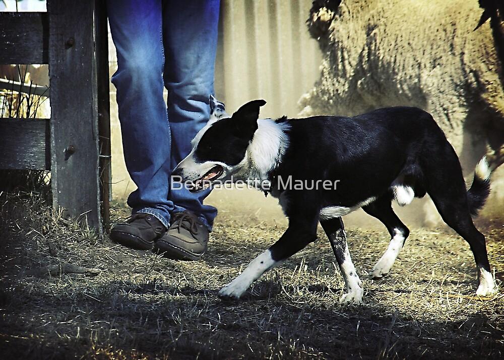 Yard dog trials by Bernadette Maurer