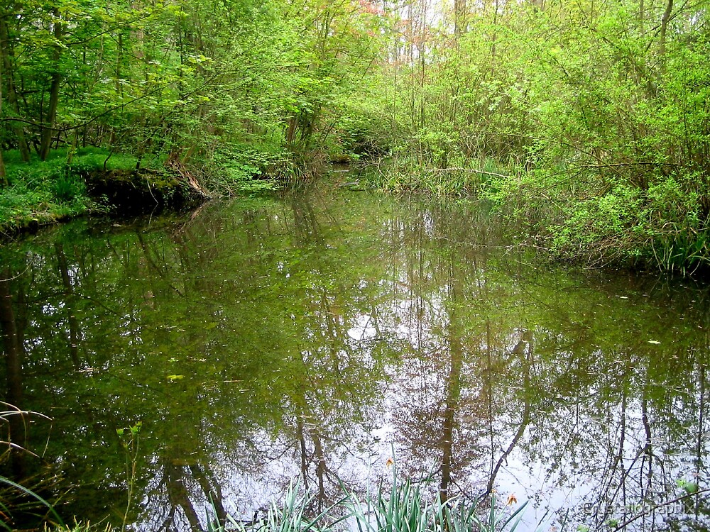 Memories of Suffolk - Woodland Pond by Crystallographix