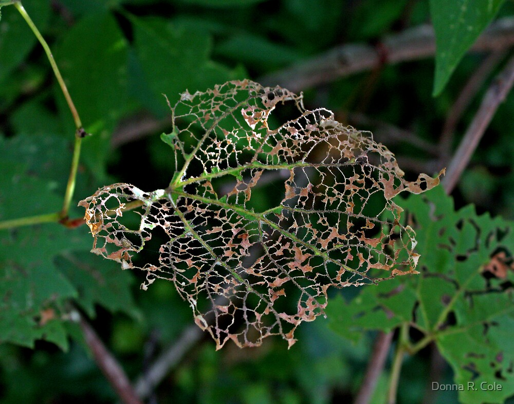 Leaf Lace by Donna R. Cole